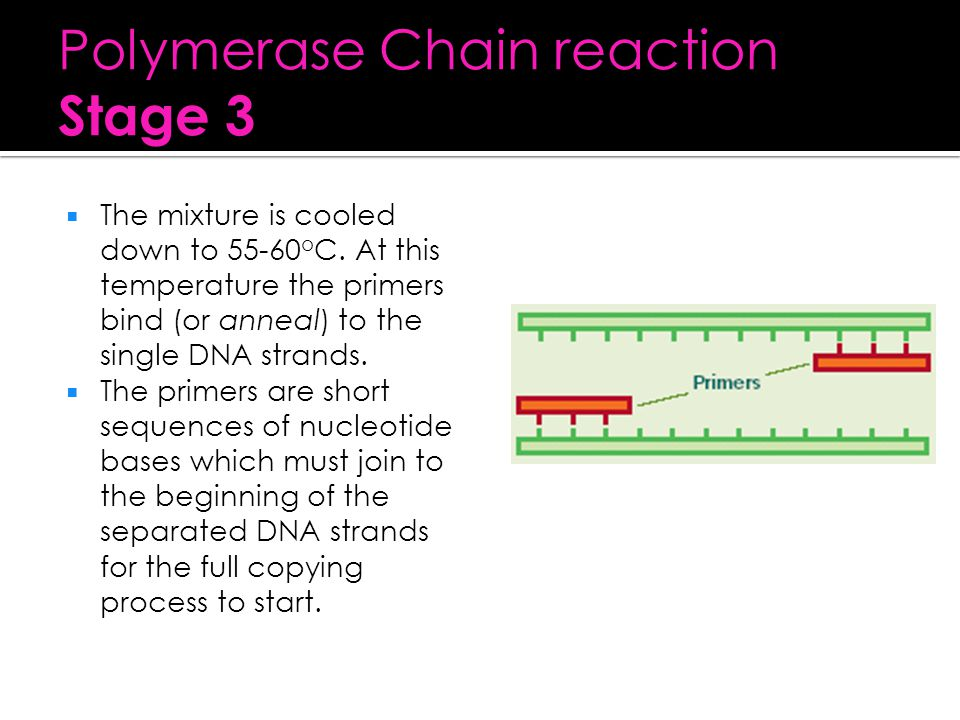Polymerase Chain reaction Stage 3