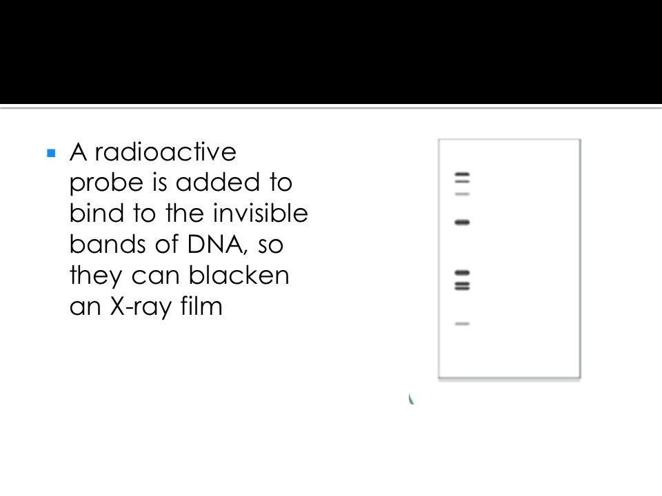 A radioactive probe is added to bind to the invisible bands of DNA, so they can blacken an X-ray film