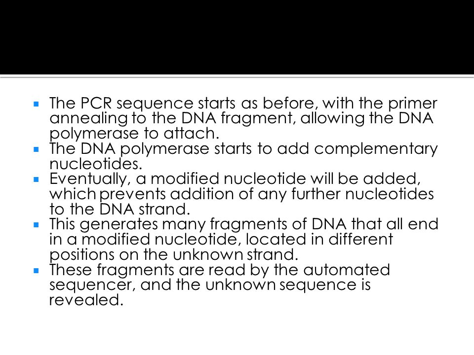 The PCR sequence starts as before, with the primer annealing to the DNA fragment, allowing the DNA polymerase to attach.