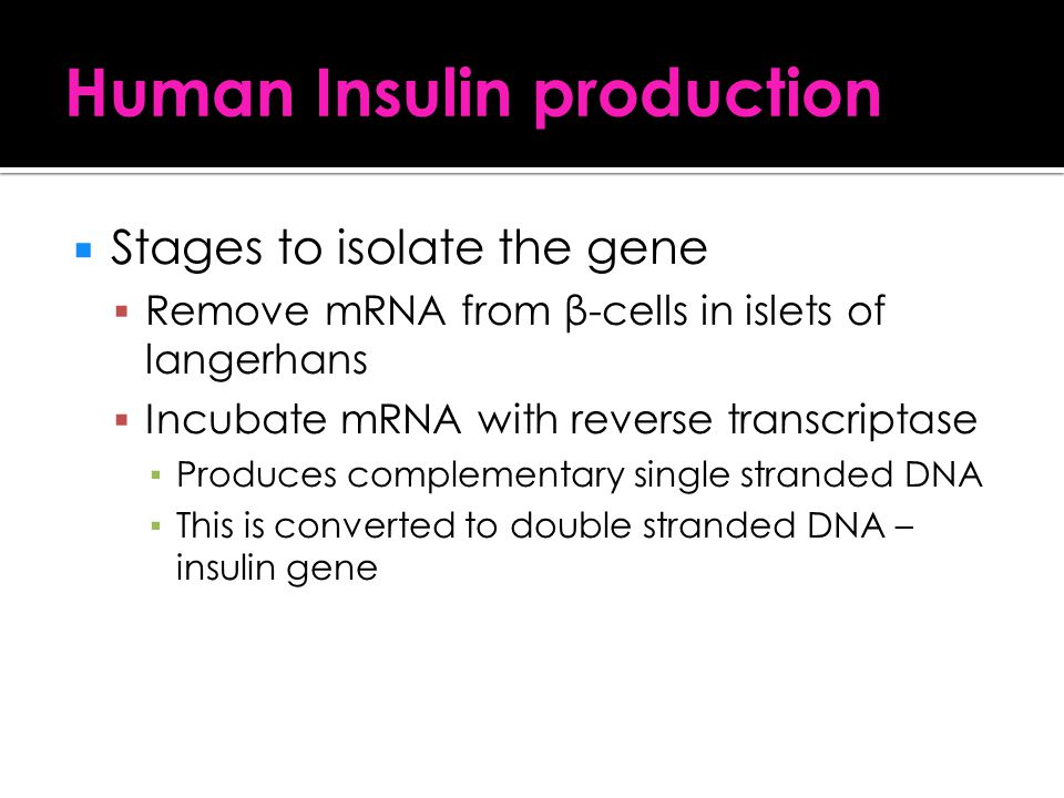 Human Insulin production