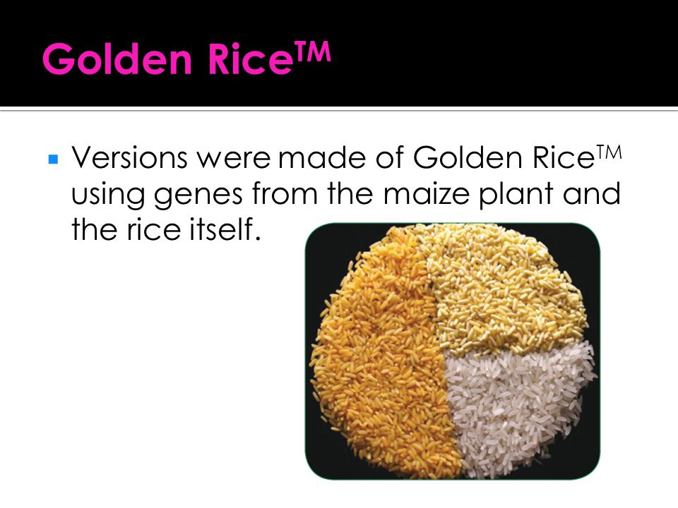 Golden RiceTM Versions were made of Golden RiceTM using genes from the maize plant and the rice itself.