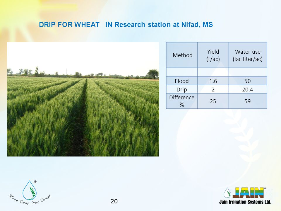 DRIP FOR WHEAT IN Research station at Nifad, MS