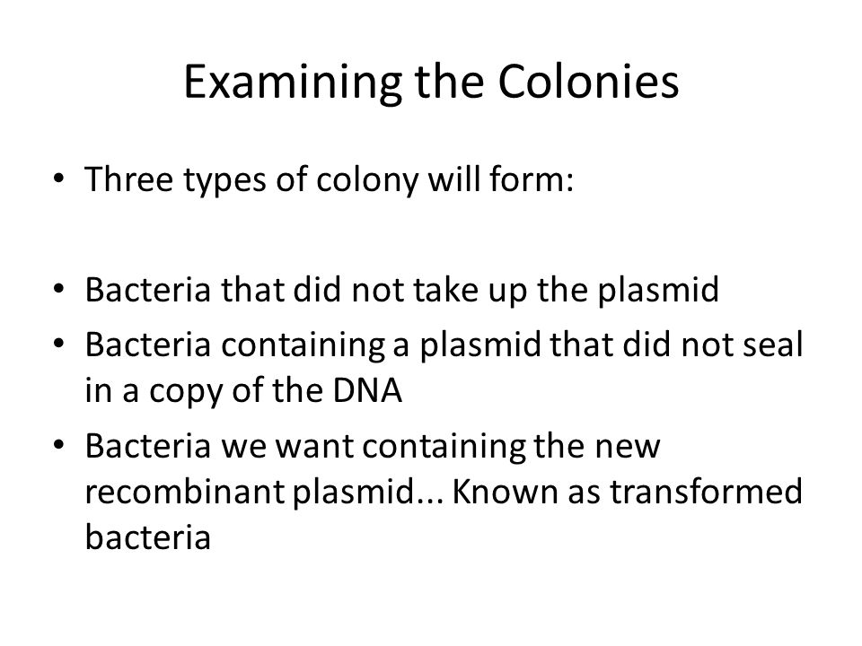 Examining the Colonies