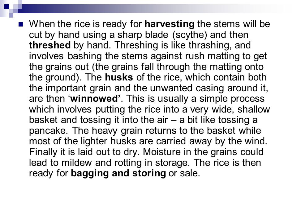 When the rice is ready for harvesting the stems will be cut by hand using a sharp blade (scythe) and then threshed by hand.