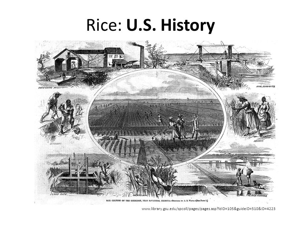 Rice: U.S. History