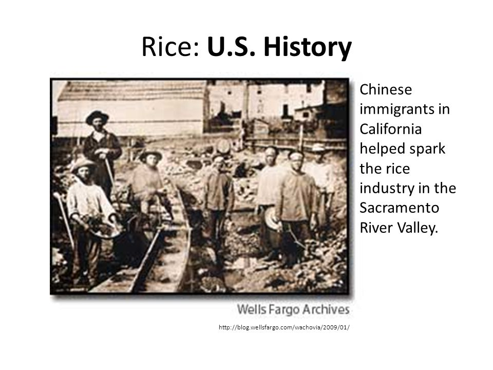 Rice: U.S. History Chinese immigrants in California helped spark the rice industry in the Sacramento River Valley.