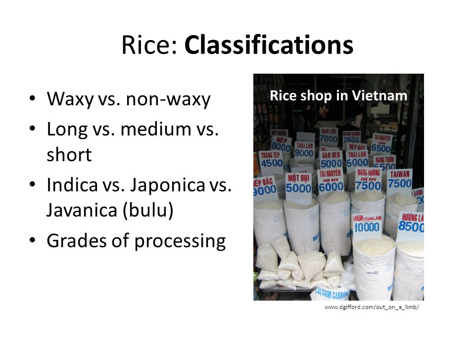 Rice: Classifications