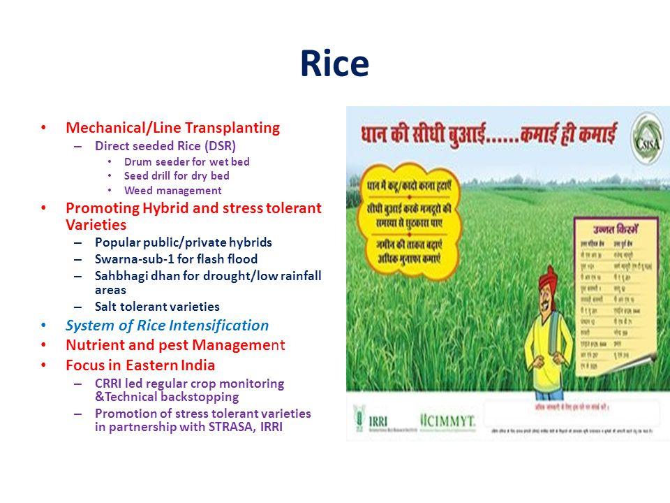 Rice Mechanical/Line Transplanting