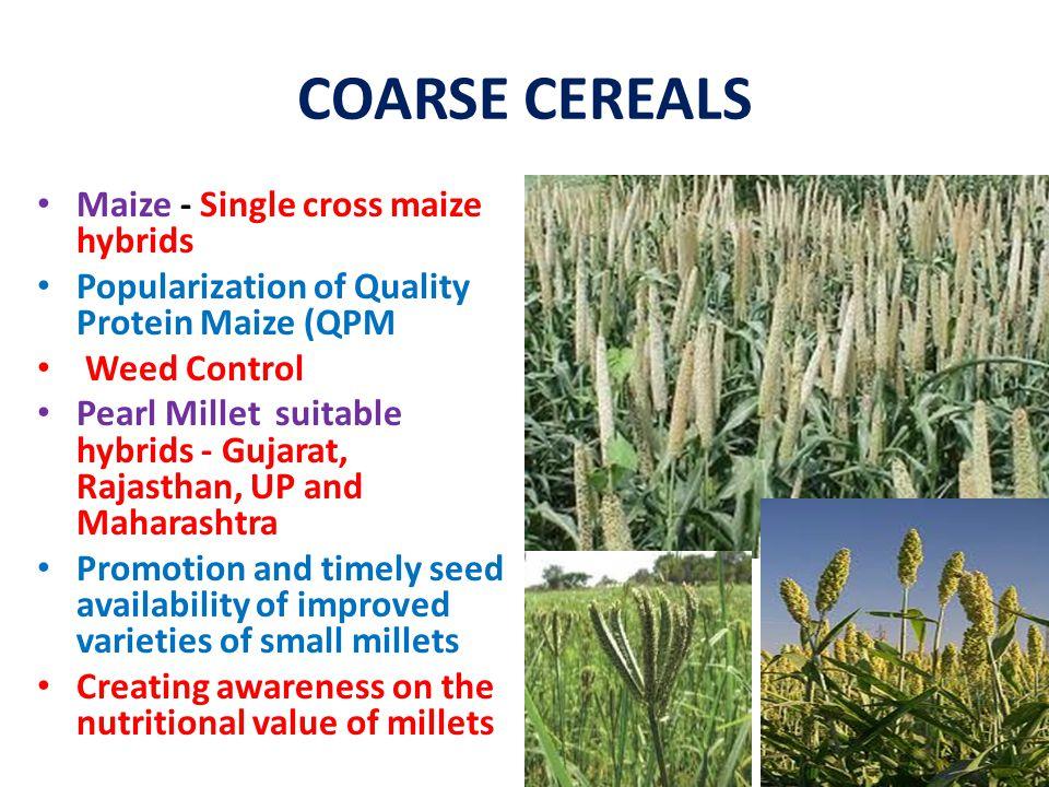 COARSE CEREALS Maize - Single cross maize hybrids