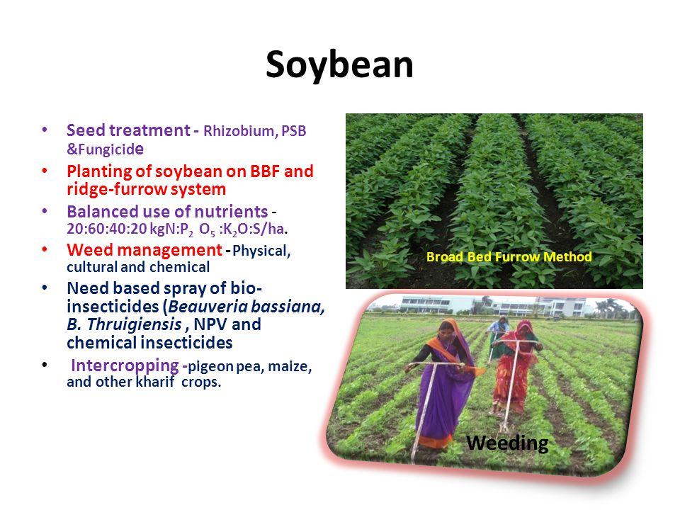 Soybean Weeding Seed treatment - Rhizobium, PSB &Fungicide