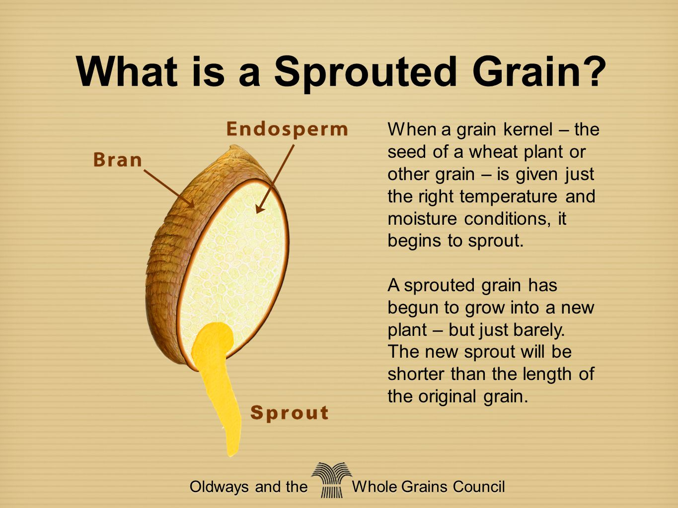 What is a Sprouted Grain