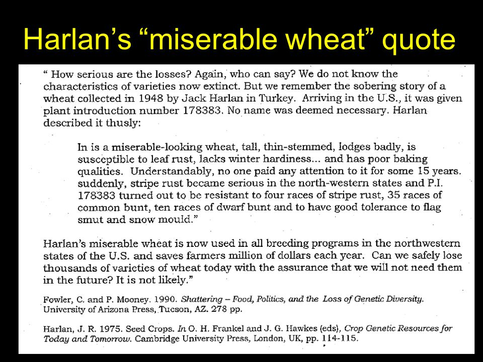 Harlan's miserable wheat quote