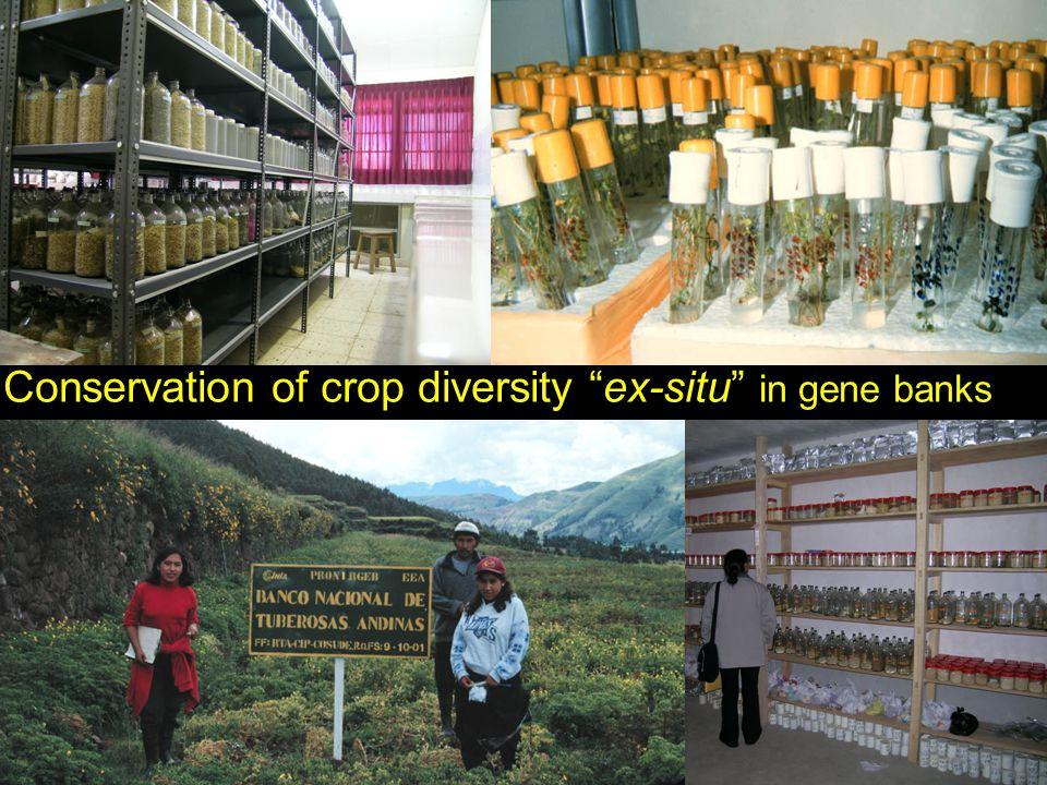 Conservation of crop diversity ex-situ in gene banks