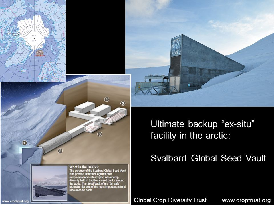 Ultimate backup ex-situ facility in the arctic: