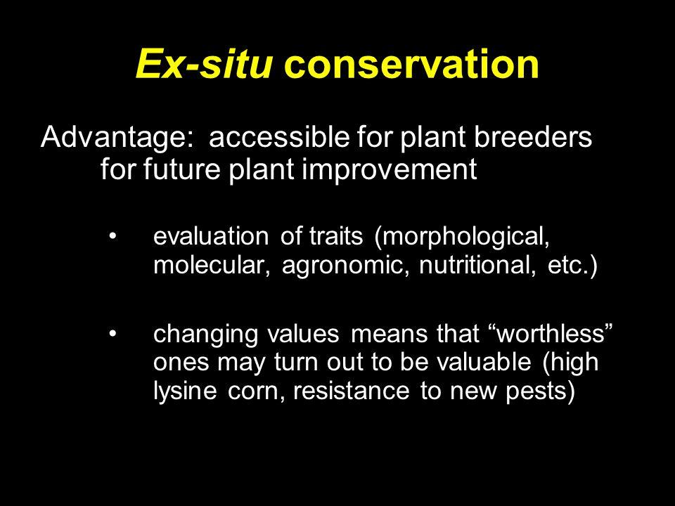 Ex-situ conservation Advantage: accessible for plant breeders for future plant improvement.