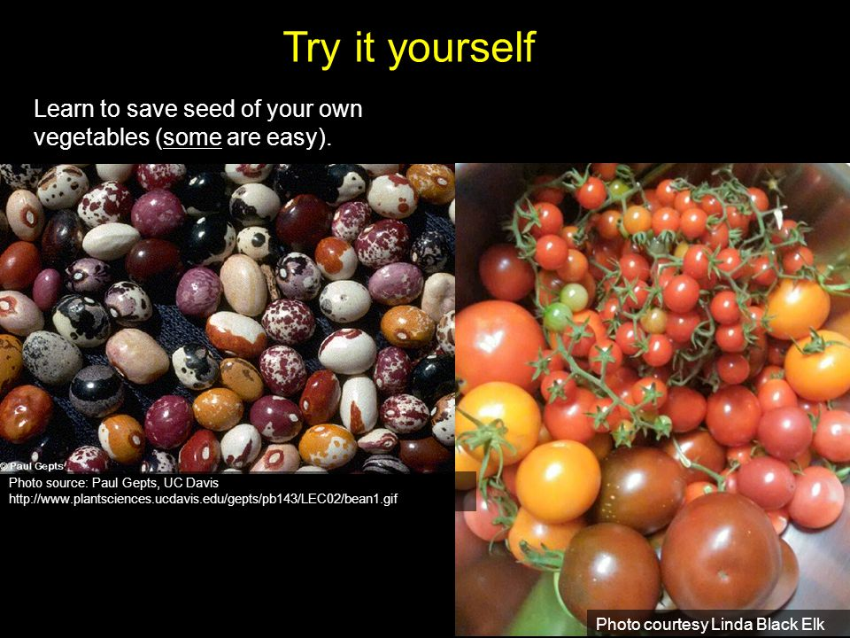 Try it yourself Learn to save seed of your own vegetables (some are easy).