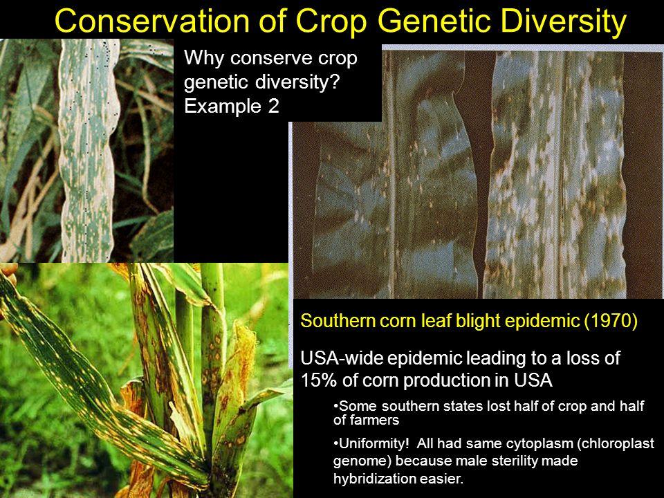 Conservation of Crop Genetic Diversity