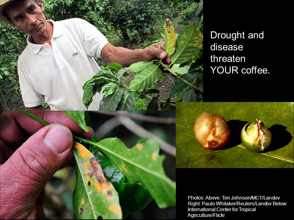 Drought and disease threaten YOUR coffee.