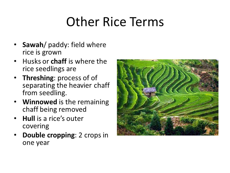 Other Rice Terms Sawah/ paddy: field where rice is grown