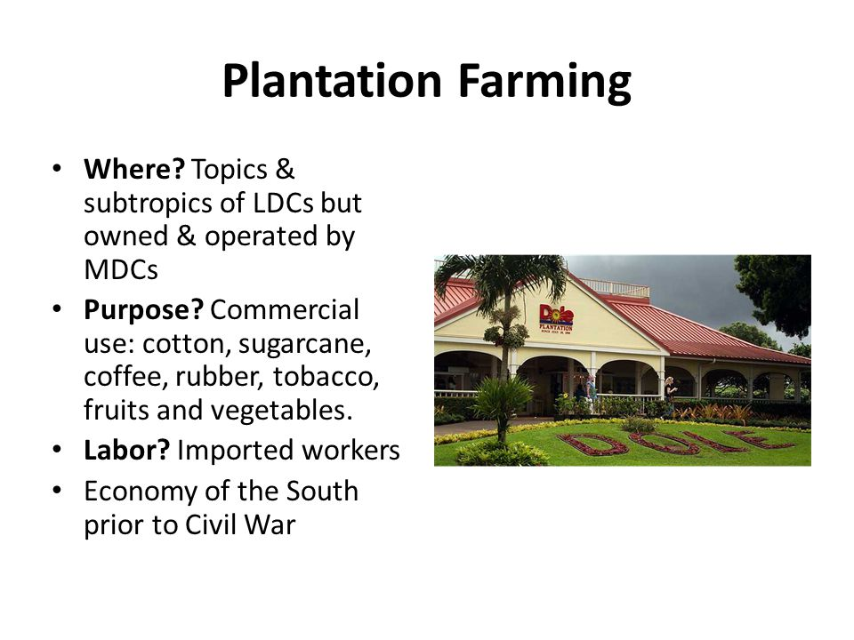 Plantation Farming Where Topics & subtropics of LDCs but owned & operated by MDCs.