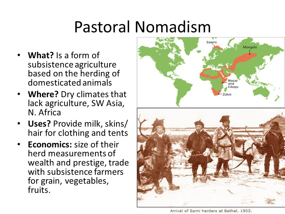 Pastoral Nomadism What Is a form of subsistence agriculture based on the herding of domesticated animals.