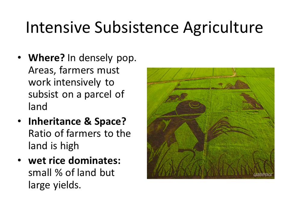 Intensive Subsistence Agriculture