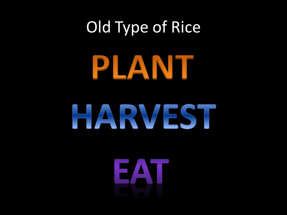 PLANT HARVEST EAT Old Type of Rice