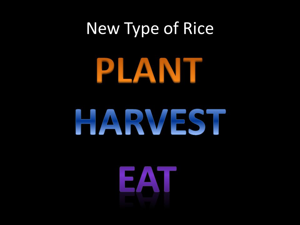 New Type of Rice PLANT HARVEST EAT