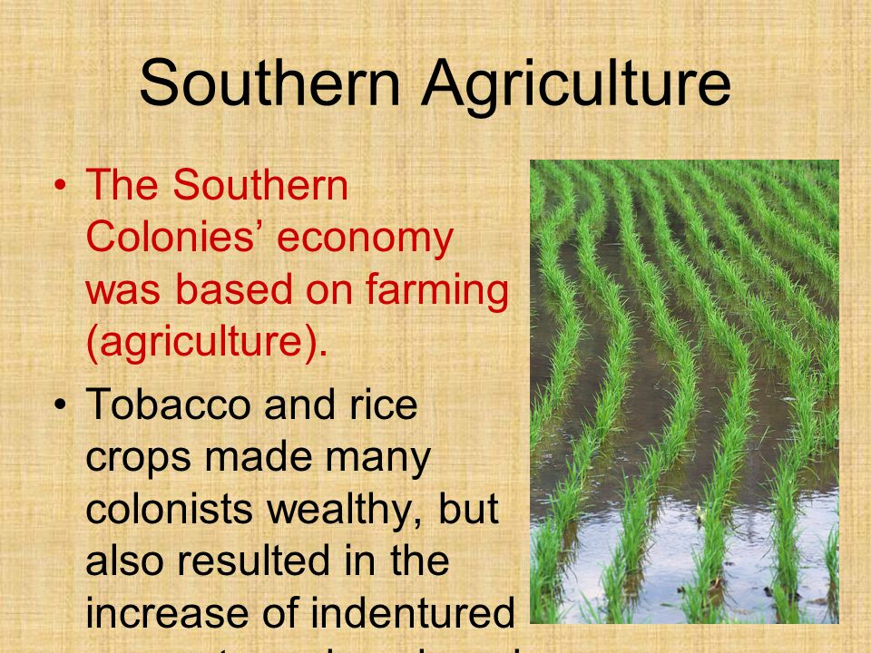 Southern Agriculture The Southern Colonies' economy was based on farming (agriculture).