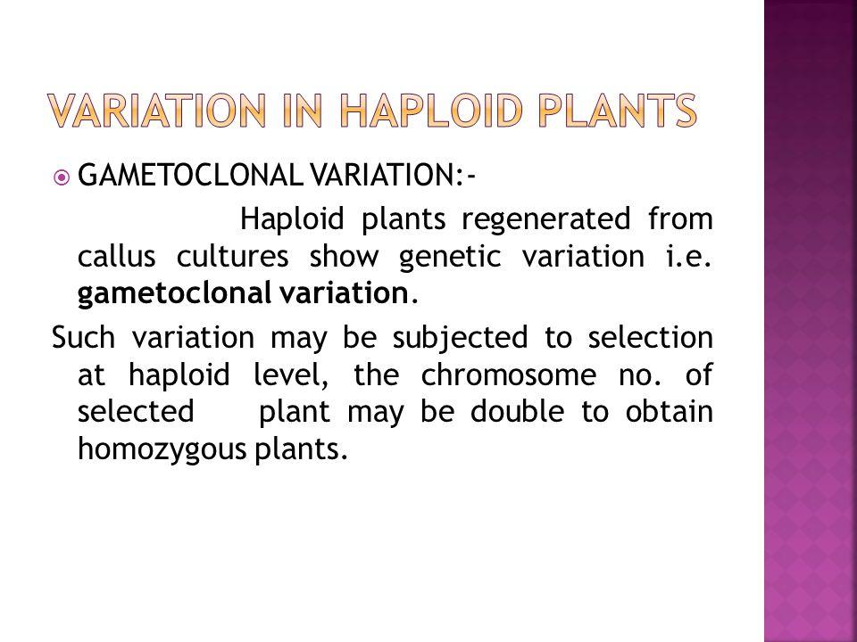 VARIATION IN HAPLOID PLANTS