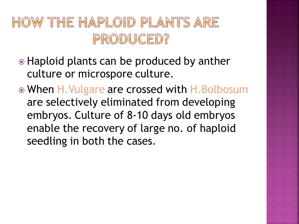 HOW THE HAPLOID PLANTS ARE PRODUCED