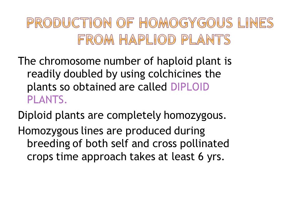 PRODUCTION OF HOMOGYGOUS LINES FROM HAPLIOD PLANTS