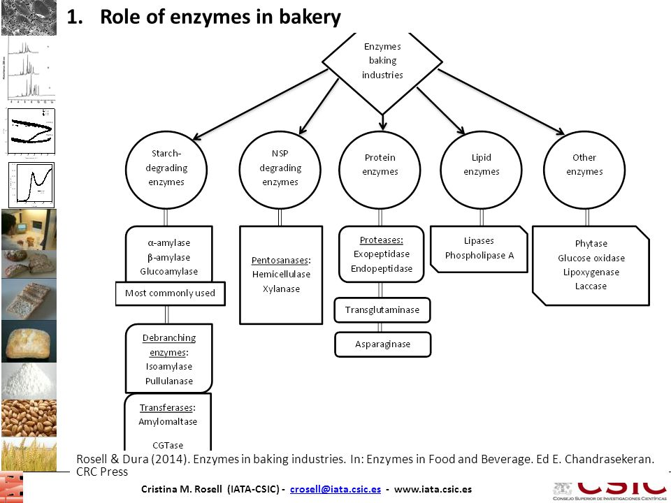 Role of enzymes in bakery