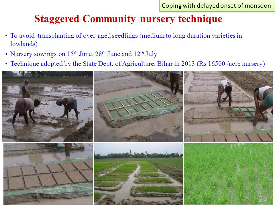 Staggered Community nursery technique