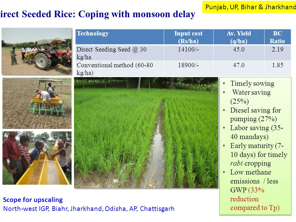 Direct Seeded Rice: Coping with monsoon delay