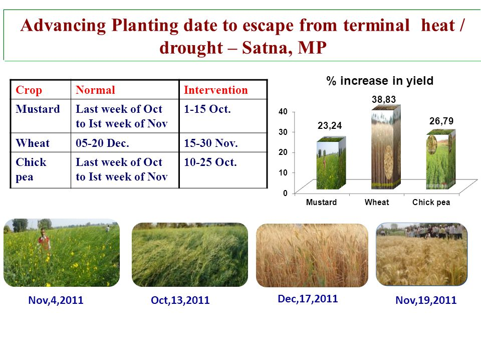 Advancing Planting date to escape from terminal heat / drought – Satna, MP