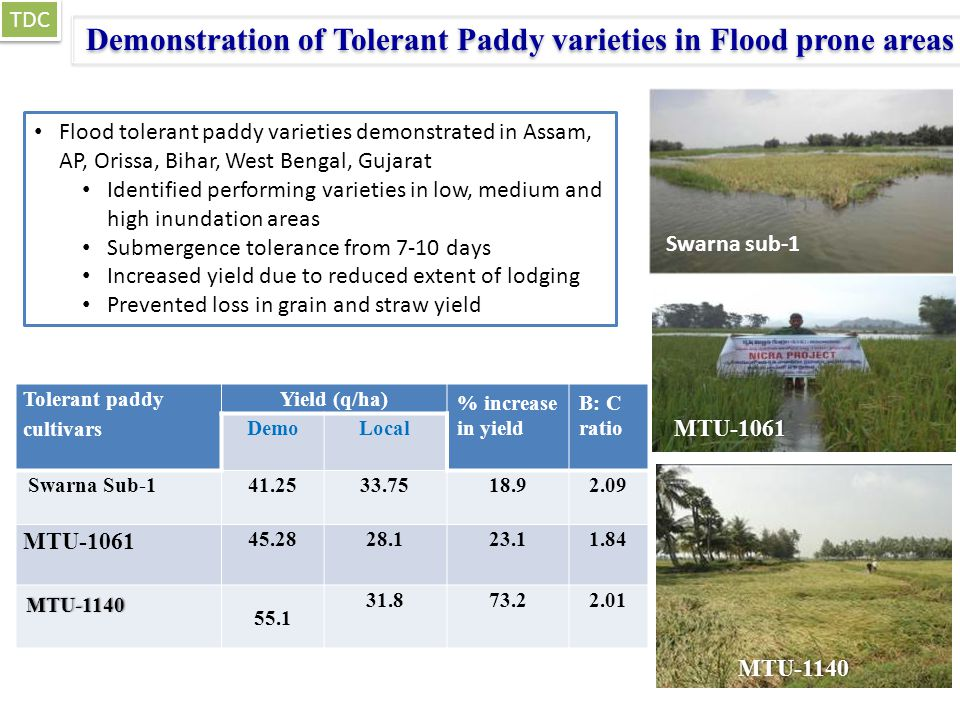 Demonstration of Tolerant Paddy varieties in Flood prone areas