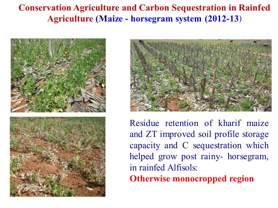 Conservation Agriculture and Carbon Sequestration in Rainfed Agriculture (Maize - horsegram system (2012-13)