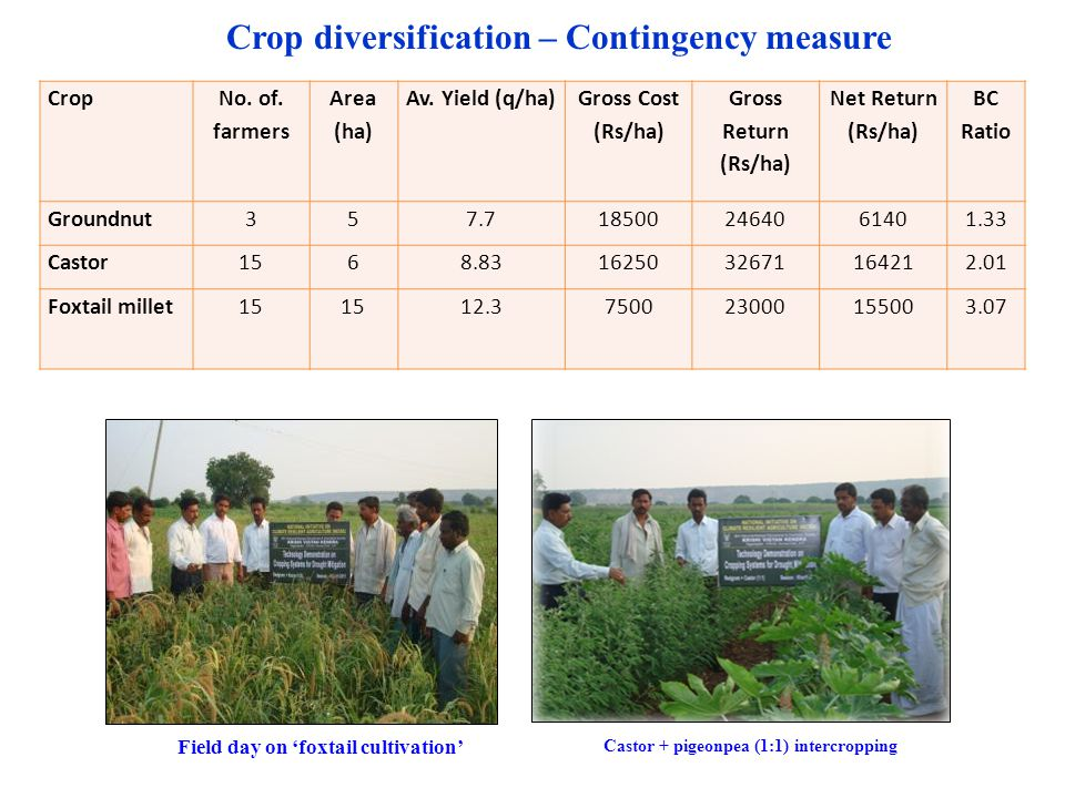 Crop diversification – Contingency measure