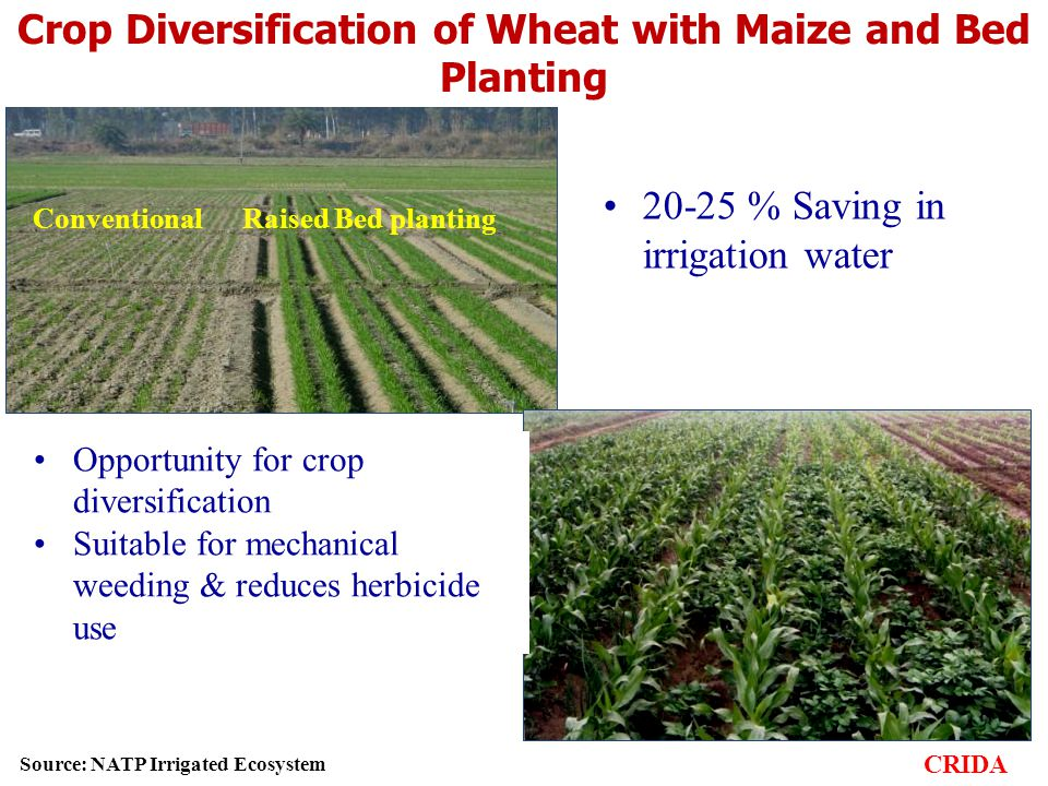 Crop Diversification of Wheat with Maize and Bed Planting