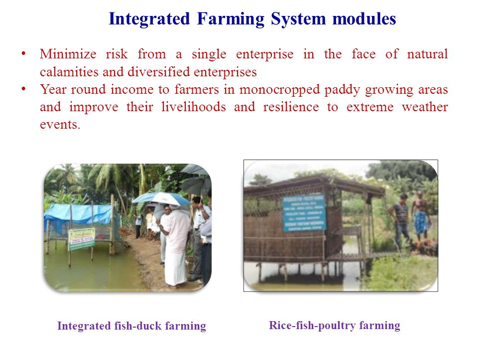 Integrated fish-duck farming Rice-fish-poultry farming