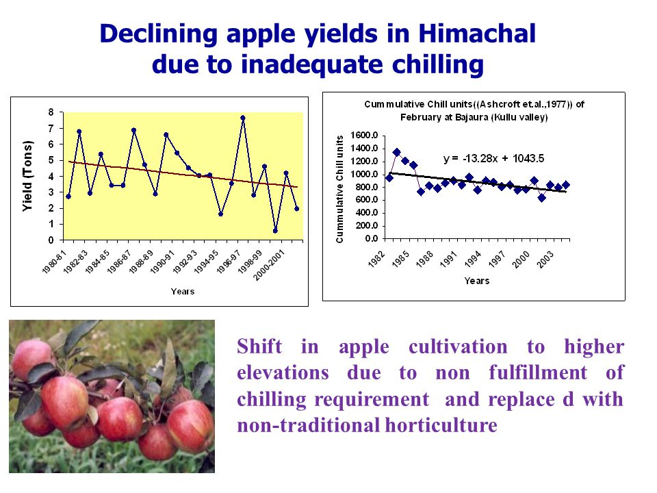 Declining apple yields in Himachal due to inadequate chilling