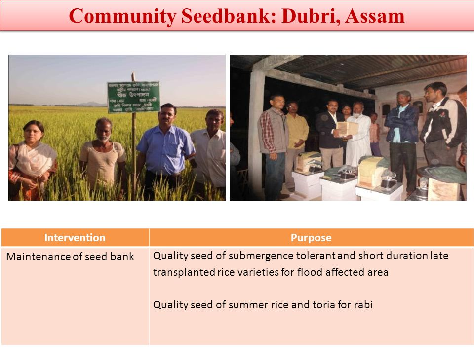 Community Seedbank: Dubri, Assam
