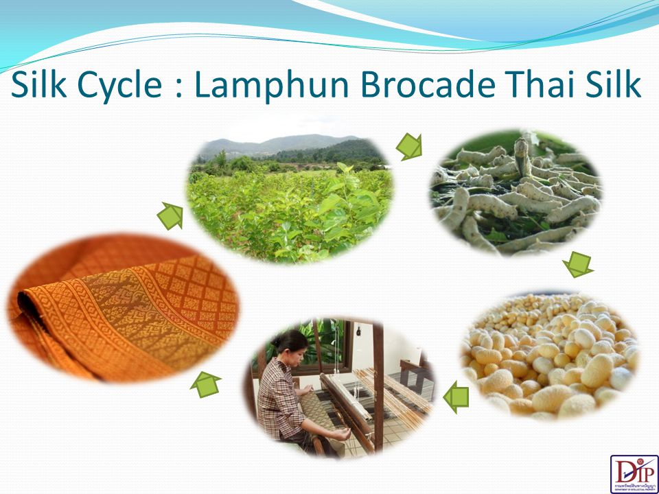 Silk Cycle : Lamphun Brocade Thai Silk