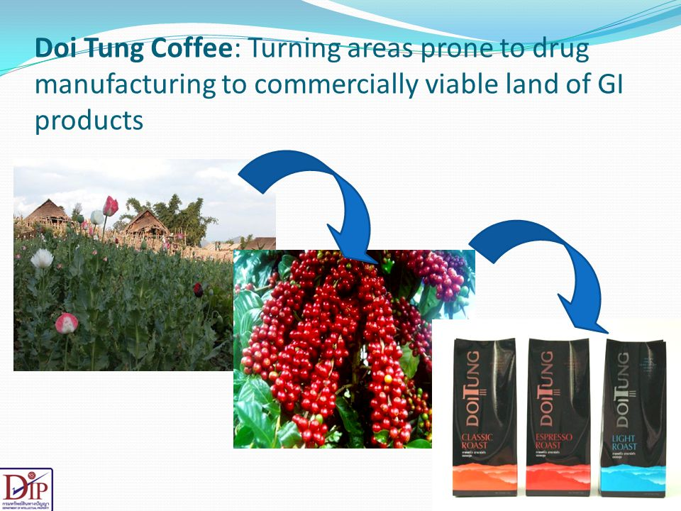 Doi Tung Coffee: Turning areas prone to drug manufacturing to commercially viable land of GI products