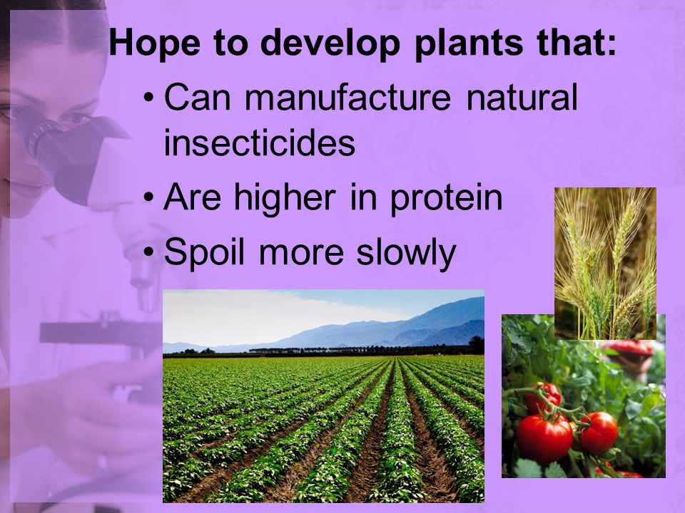 Hope to develop plants that:
