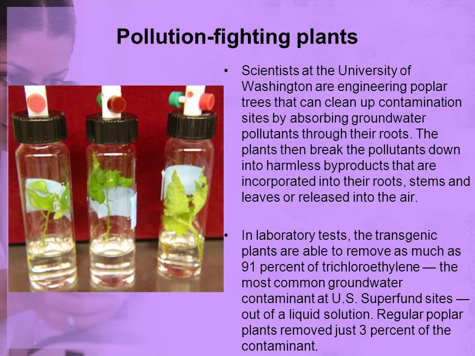 Pollution-fighting plants