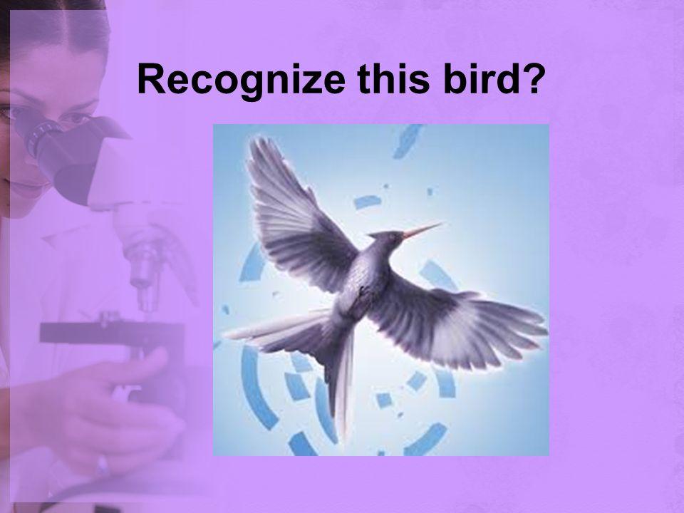 Recognize this bird