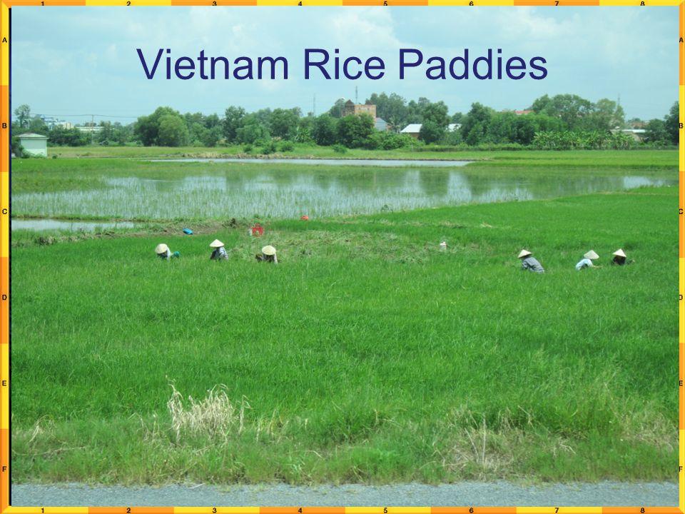Vietnam Rice Paddies