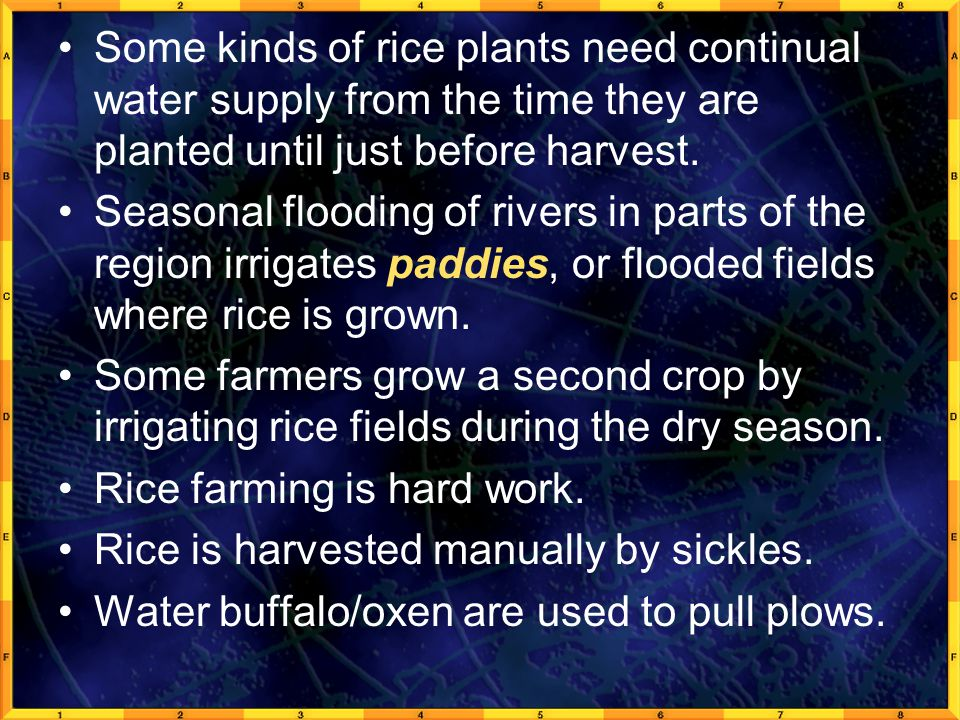 Some kinds of rice plants need continual water supply from the time they are planted until just before harvest.